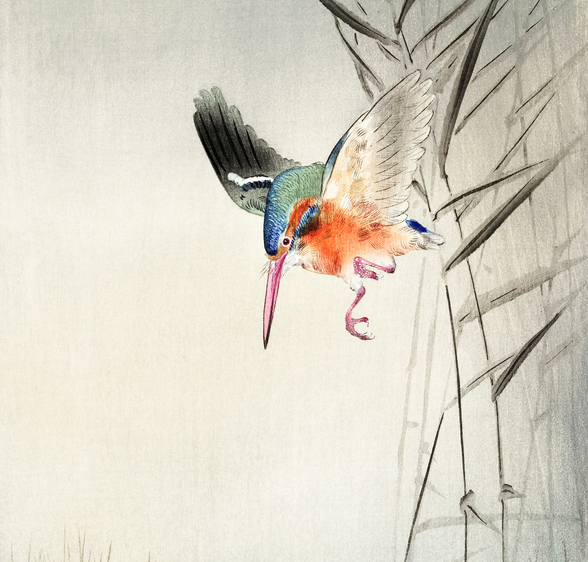 Kingfisher Hunting for Fish in the Water mural wallpaper