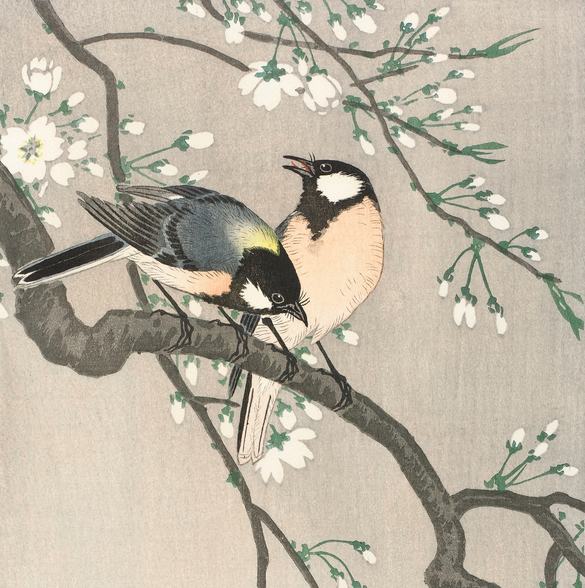 Tits on Cherry Branch mural wallpaper
