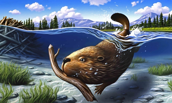 Busy Beaver mural wallpaper