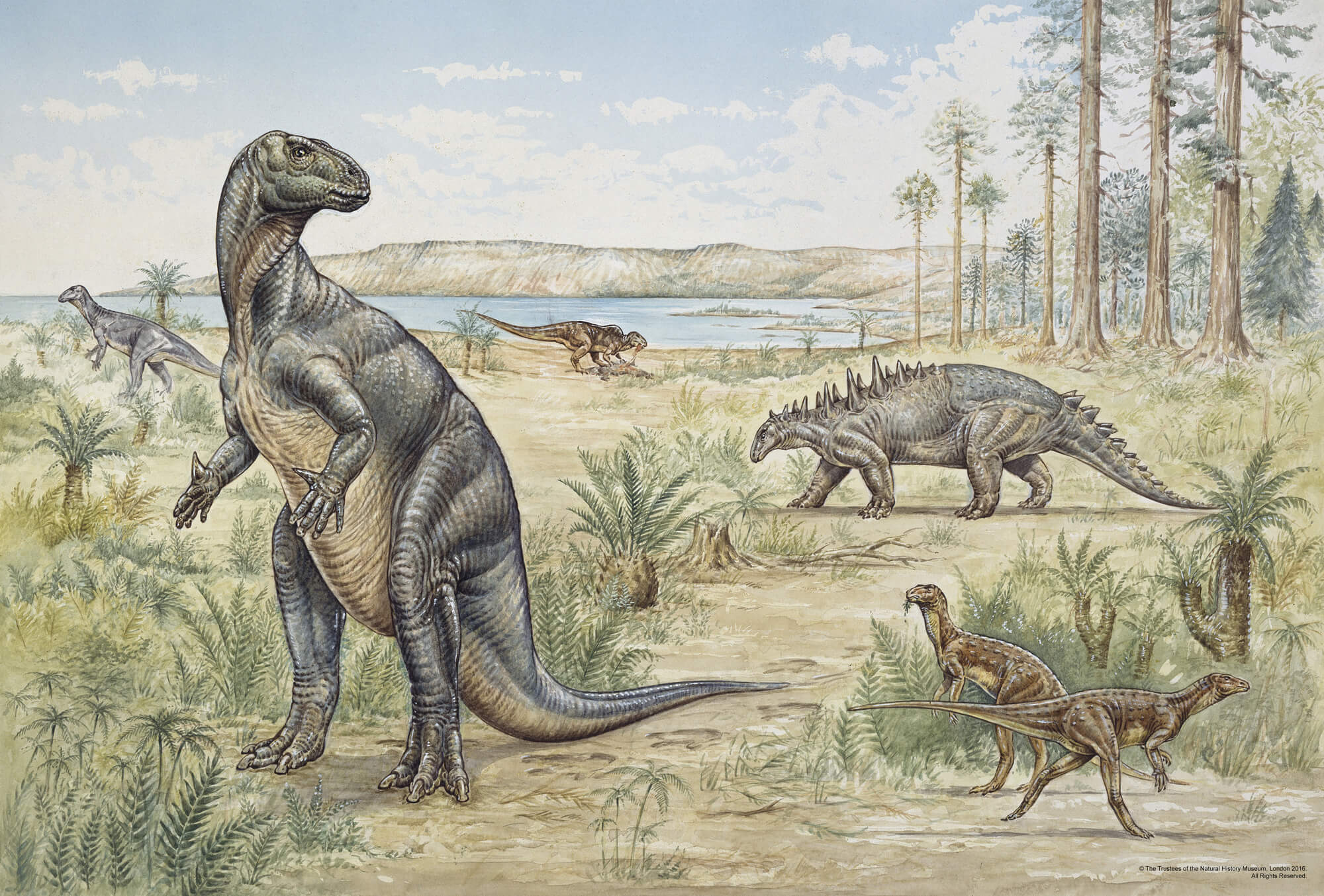 Dinosaurs wall mural natural history museum wallpaper lower cretaceous dinosaurs wall mural photo wallpaper amipublicfo Image collections