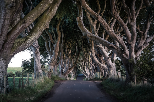 The Dark Hedges of County Antrim wall mural