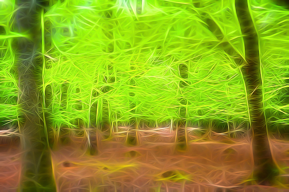 Light Beech Forest mural wallpaper
