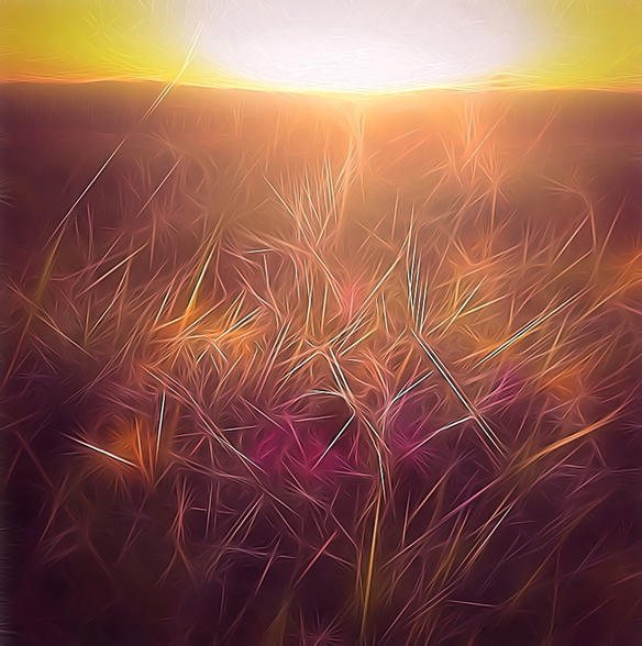 Light Dancing Grass wall mural