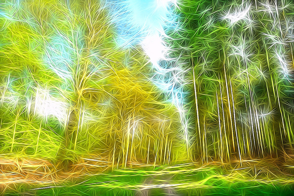 Light Forest Deep wall mural