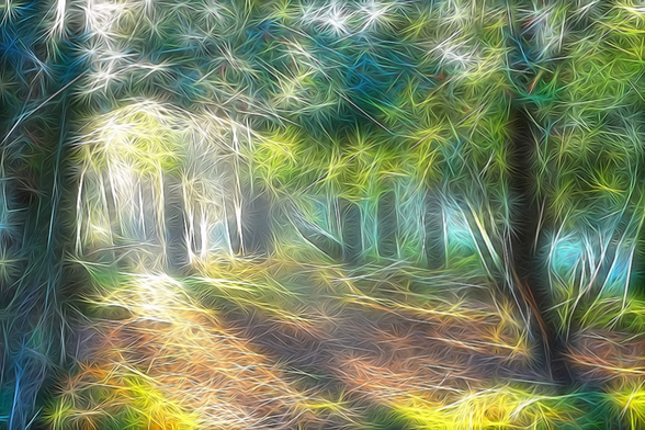 Light Shadow Trees wallpaper mural