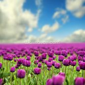 Spring Tulips wallpaper mural thumbnail