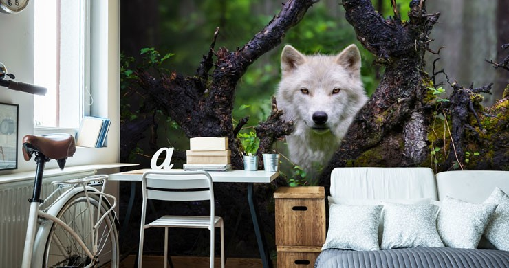 wolf peeping over fallen tree in forest wallpaper in trendy bedroom
