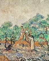The Olive Grove, 1889 (oil on canvas) wallpaper mural thumbnail