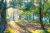 Light Shadow Trees wallpaper mural thumbnail