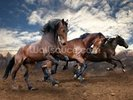 Jumping Bay Horses wall mural thumbnail