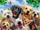 Dogs Selfie wall mural thumbnail