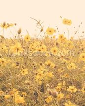 Vintage Yellow Flower Meadow mural wallpaper thumbnail