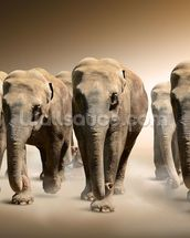 Herd of Elephants wall mural thumbnail