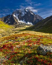 Bold Peak And Colorful Fall Tundraa wallpaper mural thumbnail