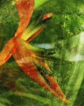 Close-Up Of Red Heliconia wall mural thumbnail