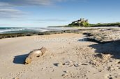 Bamburgh Castle mural wallpaper thumbnail