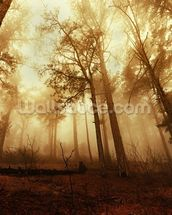 Pine Forest in the Mist mural wallpaper thumbnail