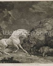 A Horse Affrighted by a Lion, engraved by the artist (etching) mural wallpaper thumbnail