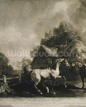 Stallion and Mare, engraved by George Townley Stubbs (1756-1815) 1776 (mezzotint) wall mural thumbnail