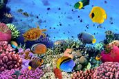 Photo of a Coral Colony mural wallpaper thumbnail