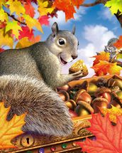 Squirrel mural wallpaper thumbnail