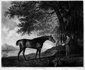 Sharke, engraved by George Townley Stubbs (1756-1815) pub. 1794 (etching) wallpaper mural thumbnail