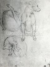 Study of a dog and a cat, c.1480 (metalpoint on paper) wallpaper mural thumbnail