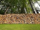 Pile of Chopped Firewood in the Woods wall mural thumbnail