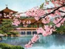 Lake With Cherry Blossoms And Shrine - Japan wall mural thumbnail