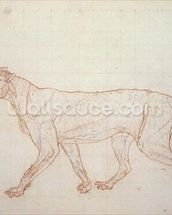 Tiger, lateral view, skin removed, illustration from A Comparative Anatomical Exposition of the Structure of the Human Body with that of a Tiger and a Common Fowl, 1795-1806 (red chalk and graphite on paper) wall mural thumbnail