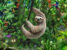 Sloth in Jungle wall mural thumbnail