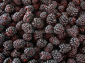 Blackberries mural wallpaper thumbnail