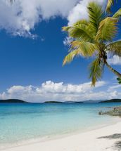 U.S. Virgin Islands, St. John, Palm Tree Beautiful Beach wallpaper mural thumbnail