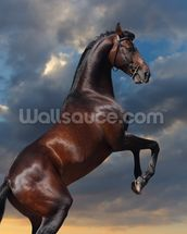 Rearing Bay Horse and Sky wall mural thumbnail