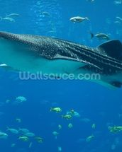 Whale Shark and Fish wall mural thumbnail