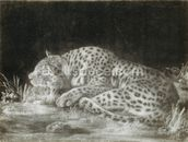 A Tyger (A Sleeping Cheetah) (mezzotint) wallpaper mural thumbnail