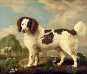 Brown and White Norfolk or Water Spaniel, 1778 (oil on panel) wall mural thumbnail