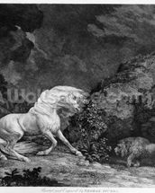 A Horse Affrighted by a Lion, engraved by the artist, 1777 (etching) wallpaper mural thumbnail
