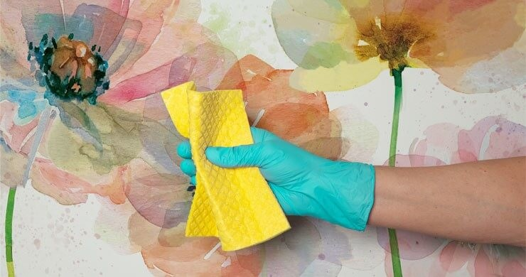 watercolour painting of poppies wallpaper with hand wearing rubber glove in front of it holding a yellow sponge
