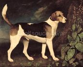 Ringwood, a Brocklesby Foxhound, 1792 (oil on canvas) mural wallpaper thumbnail