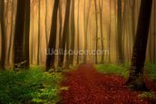 Foggy forest fairytale wall mural thumbnail