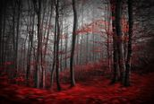 Red Carpet Forest wallpaper mural thumbnail