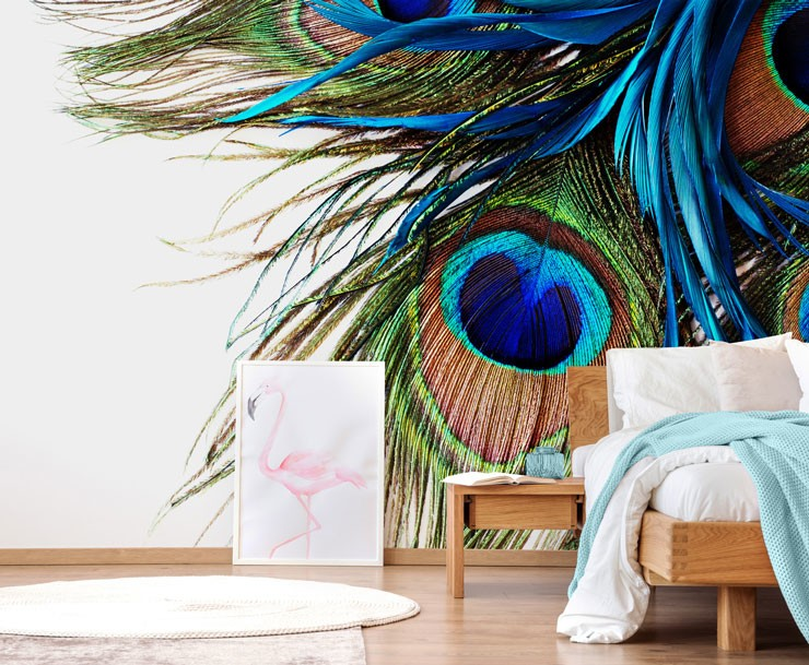 close up of peacock feathers in modern bedroom