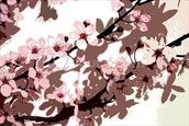 Japanese Blossom (colour photo) wallpaper mural thumbnail