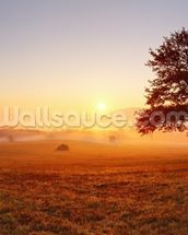 Meadow Sunset wall mural thumbnail