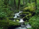 Mossy Waterfall wall mural thumbnail