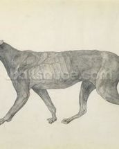 Tiger: Lateral View, with Skin and Tissue Removed, from the series A Comparative Anatomical Exposition of the Structure of the Human Body with that of a Tiger and a Common Fowl (graphite on paper) wall mural thumbnail