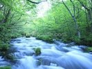 Spring Forest River wall mural thumbnail