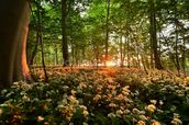 Sunlight Glow over Forest Flowers wallpaper mural thumbnail