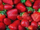 Strawberries Fresh wall mural thumbnail